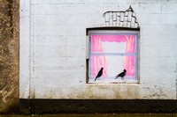 Pink Curtains, Borrisoleigh, Co. Tipperary